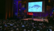 Interesting Video- &#8220;How is feeding chicken to fish sustainable?&#8221;