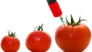 How and why to avoid GMO's